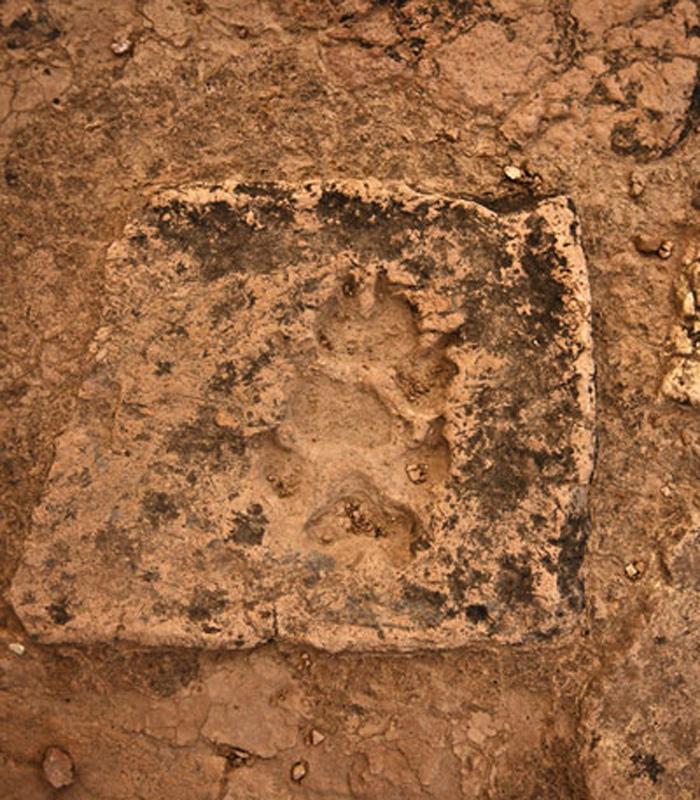 Ślad psiej łapy, Choga Zanbil, Iran