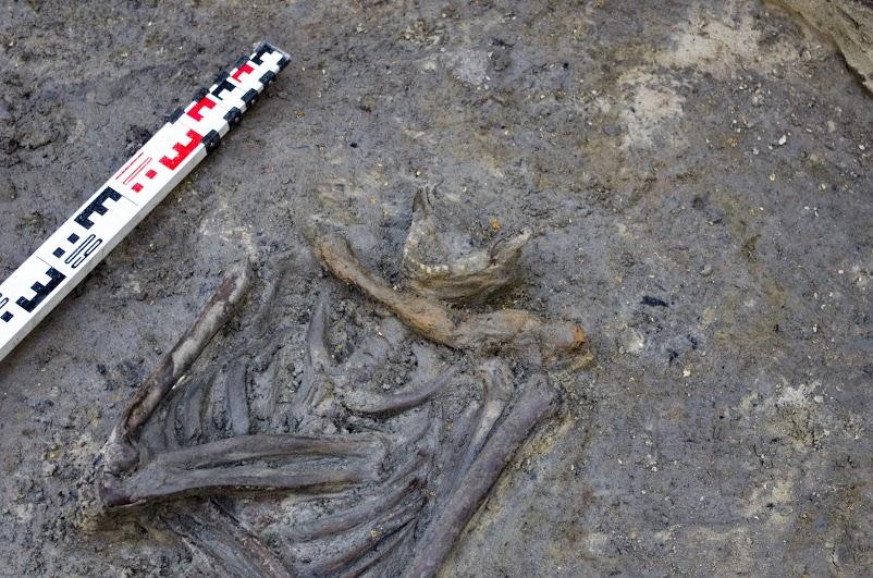 Fragment grobu z sierpem przy szyi. Chojnice. Fot. M. Kurdwanowski