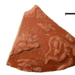 Fragment naczynia typu terra sigilata (Fot. L.Tyszler)